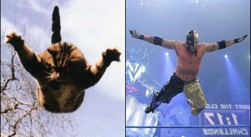 rey mysterio look like a cat