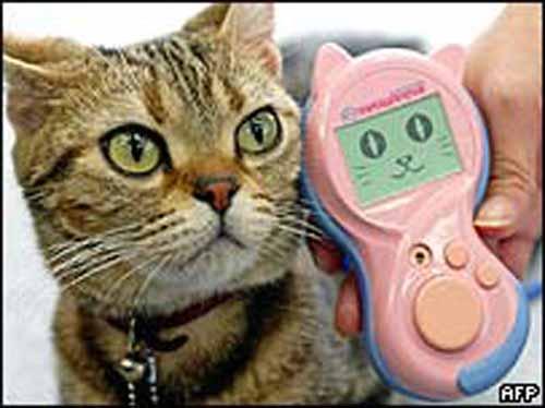 traducteur chat