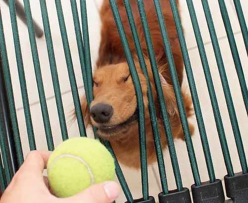 chien barreau