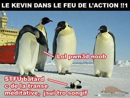 Kevin pingouin
