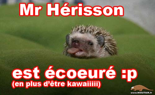 Mr herisson est écoeuré