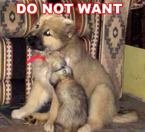 Furet chien