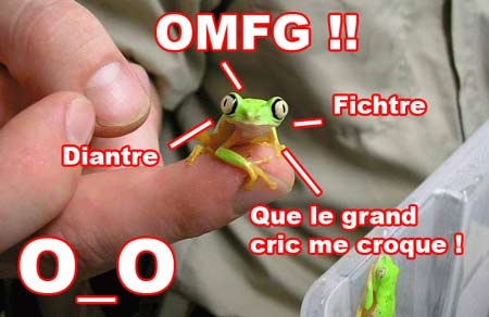 OMG grenouille