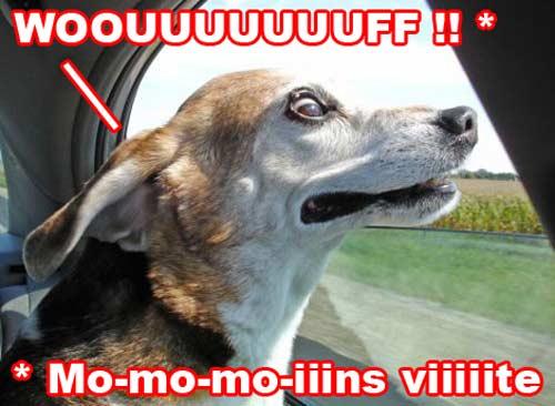 Traducteur chien