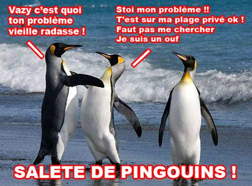 Pingouins riprizent