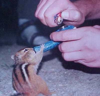 M écureuil