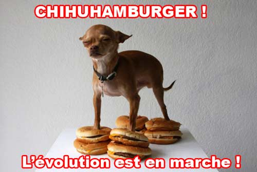 Chihuhahamburger