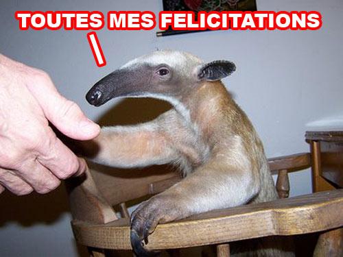 Nioutaik Felicitron1
