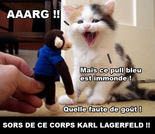 Chat Karl Lagerfeld