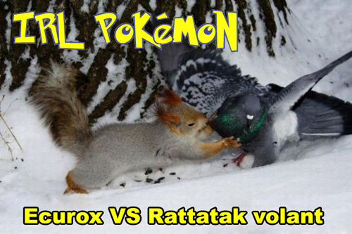 wtf pokemon