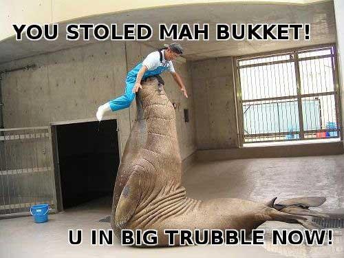 Mah Bucket