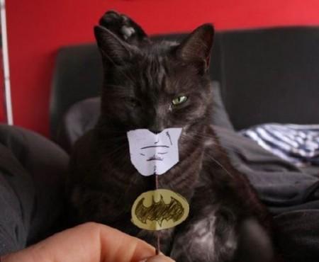 Les Super Images Batman-cat.PV__