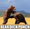 bear-dick-punch.jpg