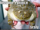 funny-pictures-frog-prince-kiss.jpg