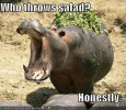 funny-pictures-hippo-salad-thrown.jpg