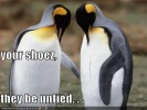 funny-pictures-untied-shoes-penguins.jpg