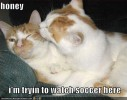 funny-pictures-watching-sports-cat.jpg