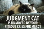judgmentcat.jpg