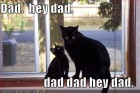 lolcats-funny-pictures-hey-dad.jpg