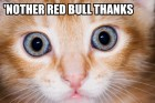 nother-red-bull-thanks.jpg
