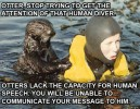 otter-stop-this.jpg