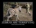 zebras-are-terrifying.jpg