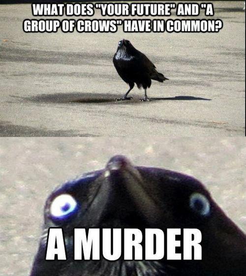 Publicité pourrie crow murder
