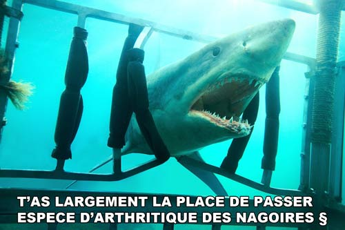 Shark 3D la critique pourrie